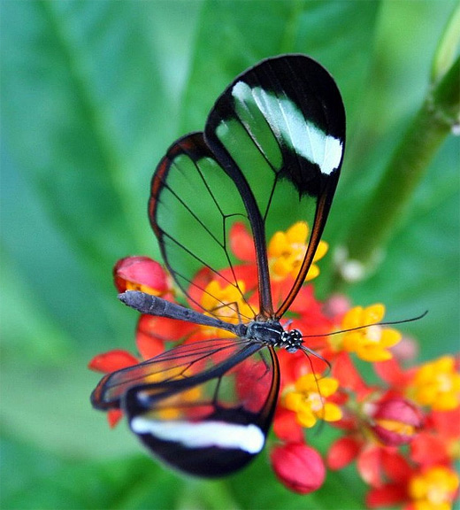 Glass transparent butterfly photography