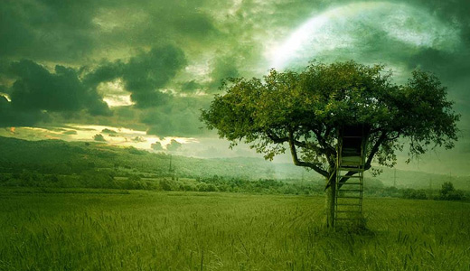 Green house trees free download wallpapers high resolution hi res