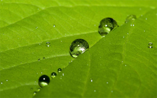 Leaf Drops wallpaper