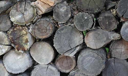 Wood Pile texture