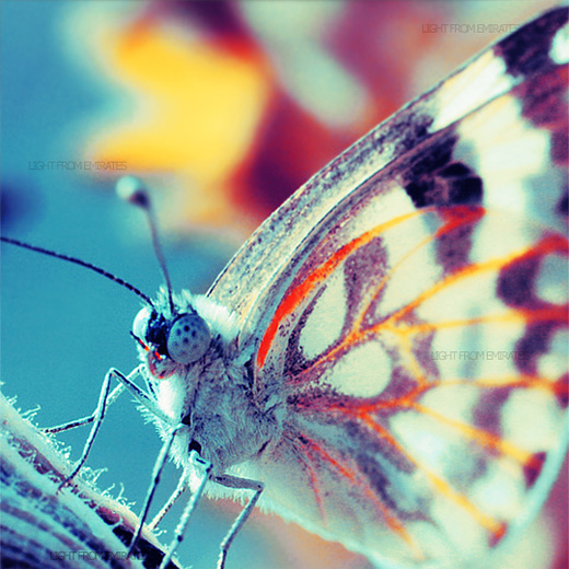 Macro butterfly photography