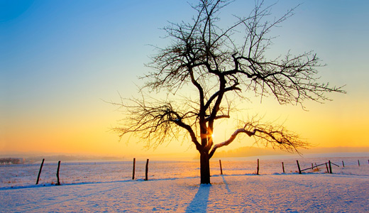 Snow dead sunrise trees free download wallpapers high resolution hi res