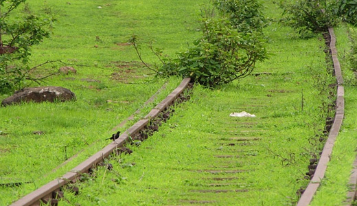 Green grass railroad free download wallpapers