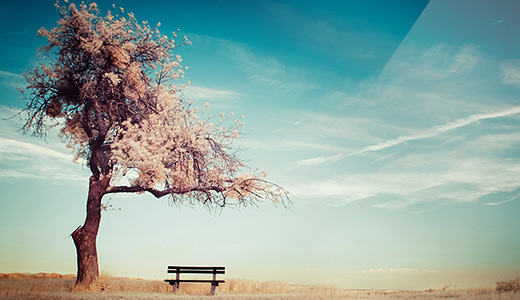Bench white trees free download wallpapers high resolution hi res