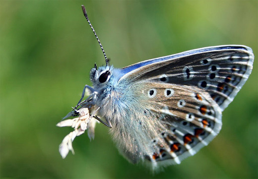 Capture prey insect butterfly photography
