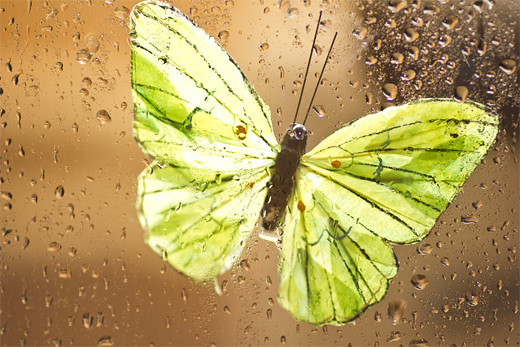 Green glass butterfly photography