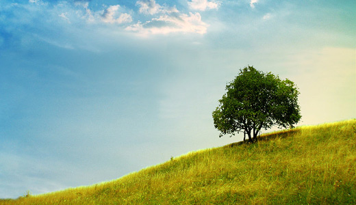Cute nice lovely trees free download wallpapers high resolution hi res