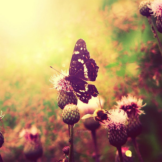 Nostalgic butterfly photography
