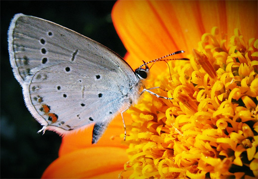 Gray grey flower butterfly photography