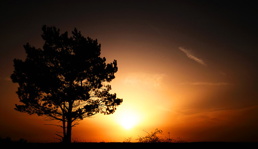 Sunrise sunset sun silhouette trees free download wallpapers high resolution hi res
