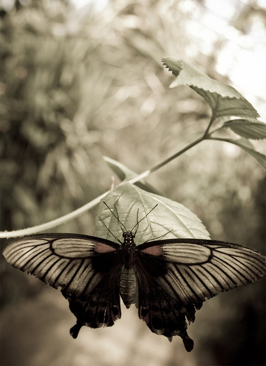 Vintage butterfly photography