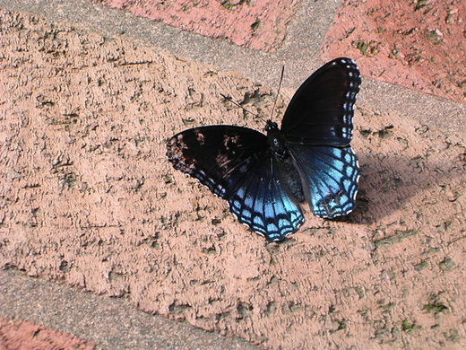 Cute black neon blue butterfly photography