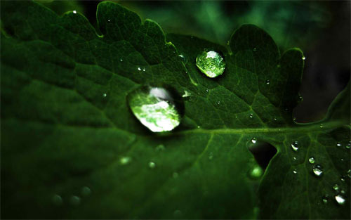 Macro Droplets Wallpaper