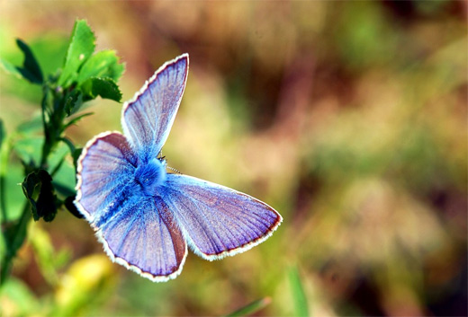 Purple blue butterfly photography