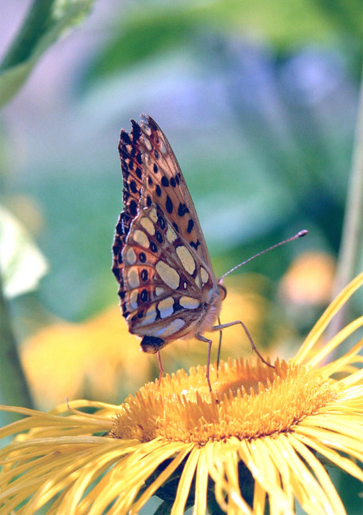 Lovely flower butterfly photography
