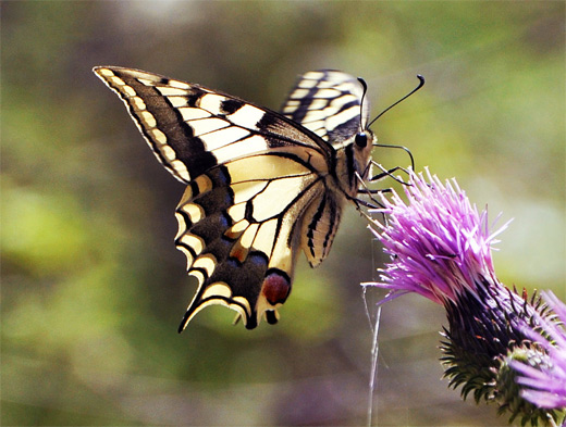 Brown butterfly photography
