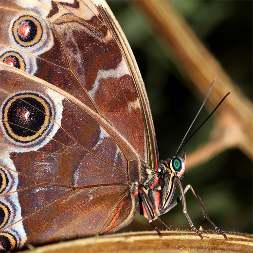 Brown macro butterfly photography