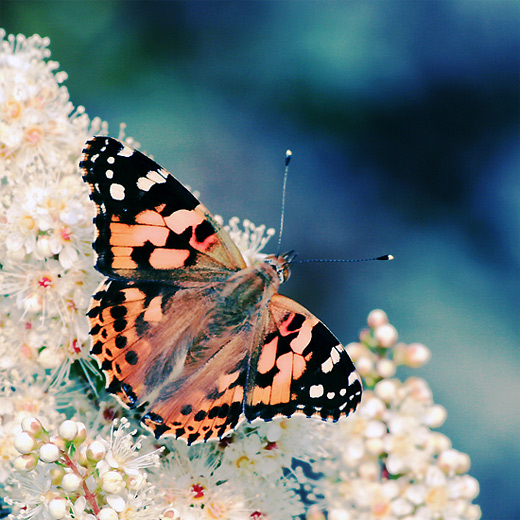 Lovely butterfly photography