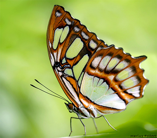 Brown orange butterfly photography