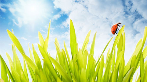 Ladybug on grass wallpapers