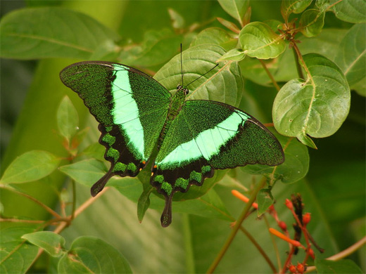 Neon green butterfly photography