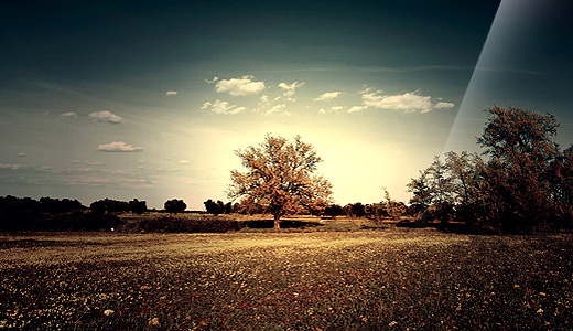Solo vintage trees free download wallpapers high resolution hi res