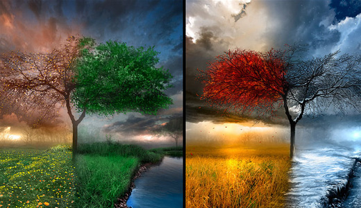 Seasonal four seasons trees free download wallpapers high resolution hi res