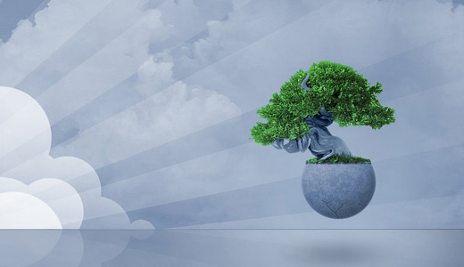 Bonsai trees free download wallpapers high resolution hi res