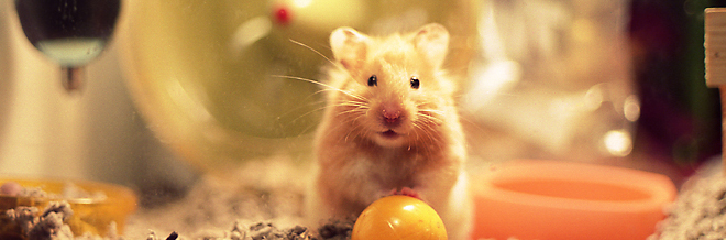 A 30 Cute and Adorable Hamster Photography Collection