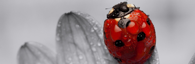 30 Cute Ladybug Wallpaper for your Desktop