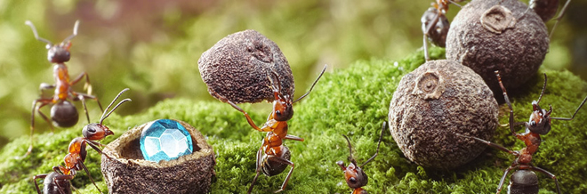 Real Ant Actors hit Spotlight in Andrey Pavlov's Macro Photography