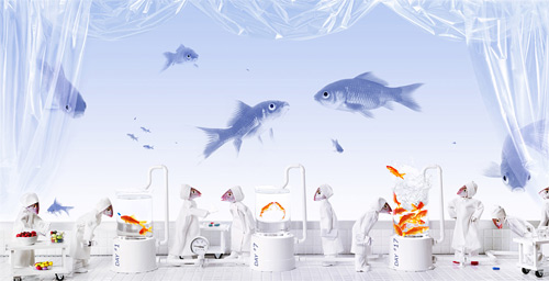 fish laboratory BECKER-ECHIVARD photography