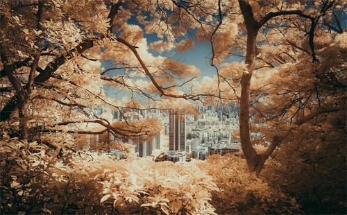 Yiu Yu Hoi Infrared Photography