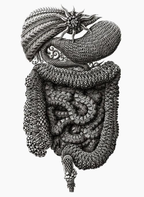 alex konahin detailed illustrations little wings