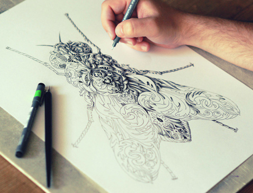 alex konahin detailed illustrations little wings