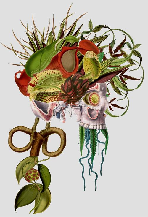 Travis Bedal anatomy fauna flora