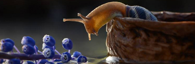 Witness The Magical World Of Snails In This Detailed Macro Photography
