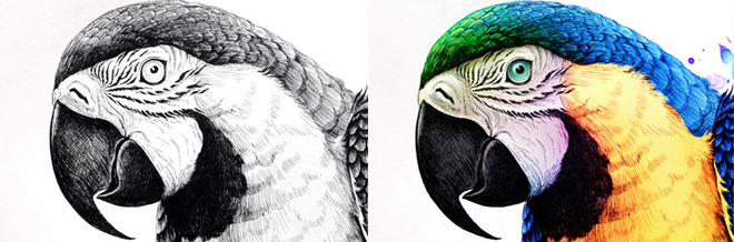 These Hand-Drawn Illustrations With Intricate Colors Will Marvel Your Eyes