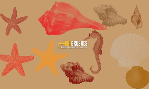 Beautiful shells photoshop brushes