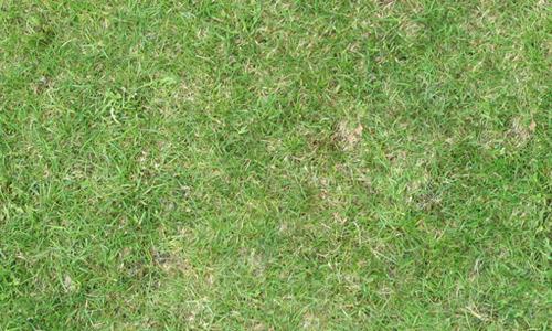 Free seamless grass textures free