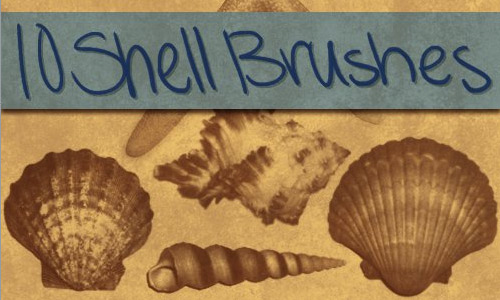 lovely shells photoshop brushes
