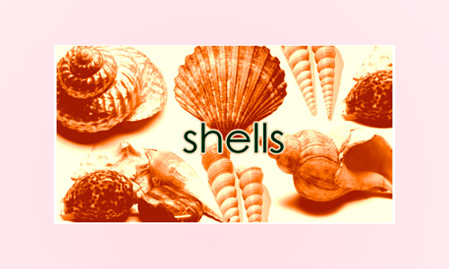 Photoshop 7 shells photoshop brushes
