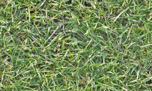High res seamless grass textures free
