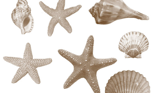Sea life shells photoshop brushes
