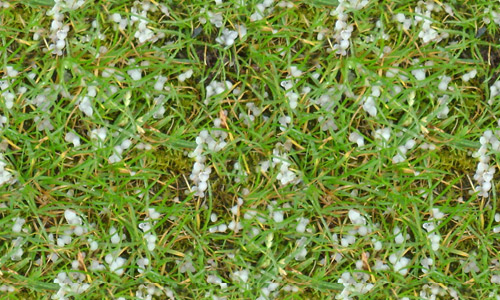 download seamless grass textures free