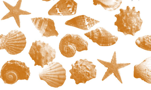 starfish shells photoshop brushes