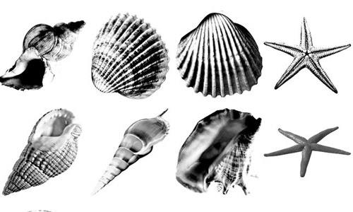 free shells photoshop brushes