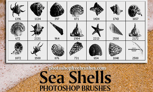 High resolution shells photoshop brushes