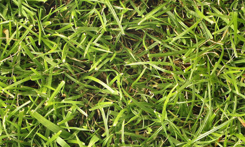 large seamless grass textures free
