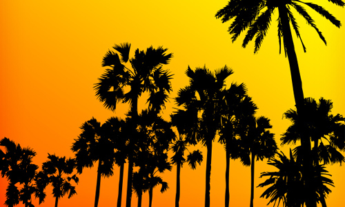 Photoshop PS7  free palm tree brushes